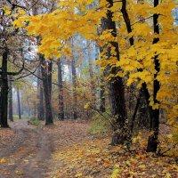 Пора октябрьских позолот... :: Лесо-Вед (Баранов)