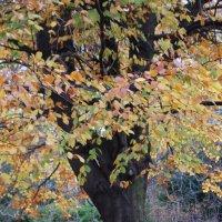 Осень! :: Asinka Photography
