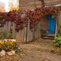 Уцелевший старый дворик :: Татьяна Копосова
