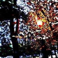 Осень..... :: юлия рудакова