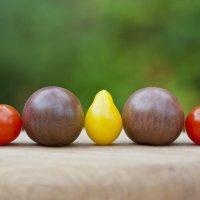 Разноцветный урожай! :: Asinka Photography