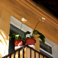 ...на чужом балконе... :: Фотогруппа Весна.