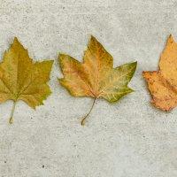 Осень это маленькая жизнь :: Александр Аль-А