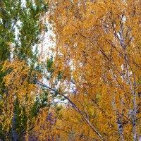 Осень из окна. :: Елена Михеева