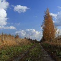 Дорога в осень 2 :: OlegVS S