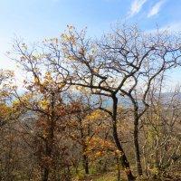 Тропинка с горы :: Валерий Дворников