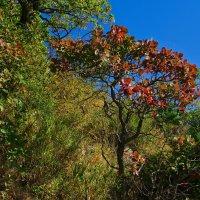 Краски осени на горе :: Валерий Дворников