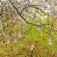 Город. Осень. Последние краски. Октябрь. Пасмурно. :: Геннадий Александрович