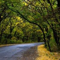 Дорога в осень :: Надежда Хлыстова