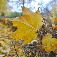 осенние листья :: Екатерина Яковлева