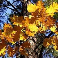 Осеннею мозаикой листвы... :: Лесо-Вед (Баранов)