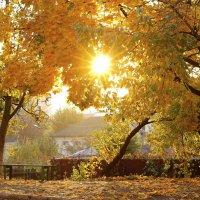 Осеннее солнце :: Михаил Кашанин