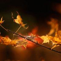 Осень :: Виталий Гальчевский