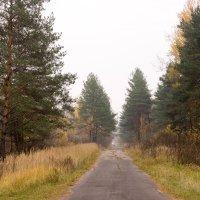 лесная дорога :: Pavel Fedorov
