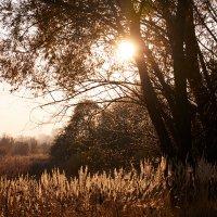 осеннее солнце :: IBRAGIMOV _