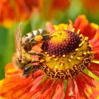 Пчелы 4 :: Viacheslav
