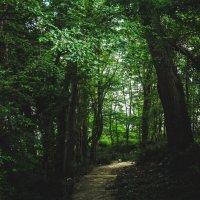 В лесу. :: Альбина Дорохина