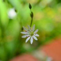 цветок :: Андрей Ртищев