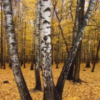 Есть подозрение, что - Осень IMG_2649 :: Андрей Лукьянов