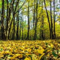 осень :: Игорь Чичиль