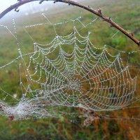 Поразвесила осень паутинки :: лидия Кашицина