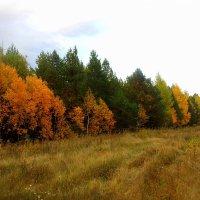 У леса на опушке... :: лидия Кашицина