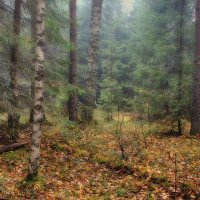Туманный лес 6 :: марк