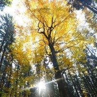 в лесу :: Nina sofronova