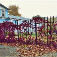 Осень в городе. :: Владимир Валов