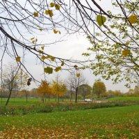 оголяет осень деревья :: Елена