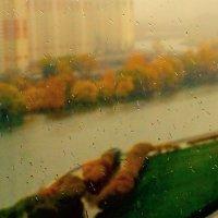 Настроение осени. (снято на телефон) :: Ольга Малинина