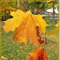 Осенний этюд :: Лидия (naum.lidiya)