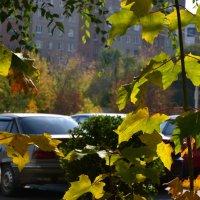 Осень.... :: Александр Яценко