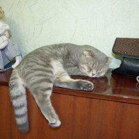 Сладко спим. :: Alex 711402