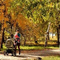 В осеннем парке :: Владимир Болдырев