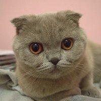 Кошка :: Христя Стефанишина
