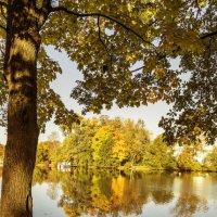 Деревья в золото одеты :: Valerii Ivanov