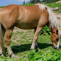 Ой чий то кінь стоіть... :: Василий Ворохта