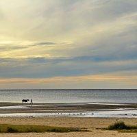 Всадник и конь, идущие берегом моря ... :: Николай Танаев