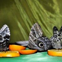 бабочки :: оксана рахова