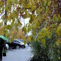 Под осенним дождём :: bemam *