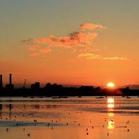 На закате во время отлива :: Елена