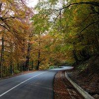 15 октября, серединка осени :: Malkhaz Gelashvili