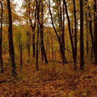 Осенний лес :: Татьяна Кретова