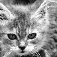 Котик :: Максим Каплун