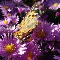 Бабочка :: Оксана Хорева