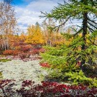 Северная Осень :: Раиса Торопова