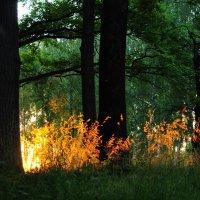 лучик солнца в темном лесу :: Лисяна •