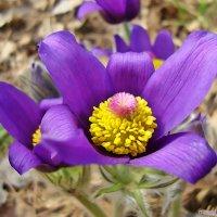 Первые цветочки :: Лидия (naum.lidiya)