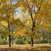 Золотая осень. :: Валентина ツ ღ✿ღ